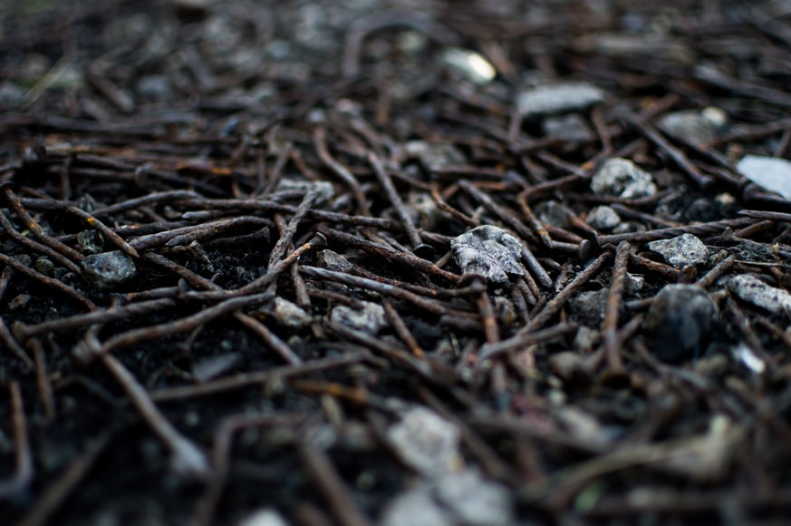 A pile of rusty old nails